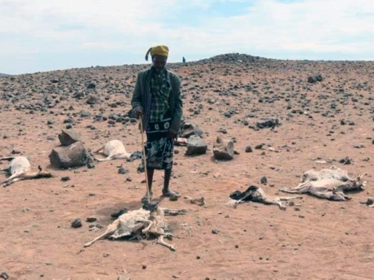 Drought striking hard Kenya's ASAL areas.